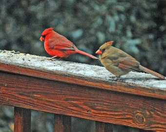 """8"""" x 10"""", """"Two Cardinals""""  Print. Matted 11"""" x 14"""".   Ships Free (USA Only)"""