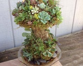 Whimsical Succulent Mushroom- The perfect addition to your garden, makes a great gift