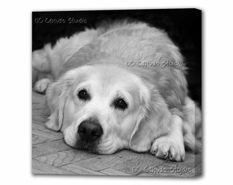 Dog Photo Canvas Print Wall Decor. Gallery Wrapped Canvas.