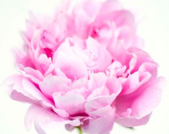 Peony Photography: Fine Art Pink Peonies Photo Print, Fine Art, Modern Floral, Nature Photography, Pink Peonies, Digital Photography,
