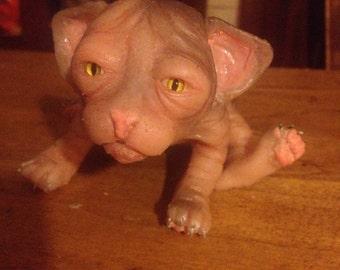 Baby sphynx