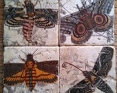 Magnificent Moths Marble Tile Coasters - Set of 4