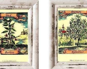 Art Print Set of 2 Prints Botanical Herbs Vintage