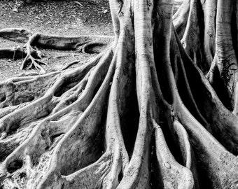 Balboa Park Tree, San Diego, Black and White Photography, Tree, Art