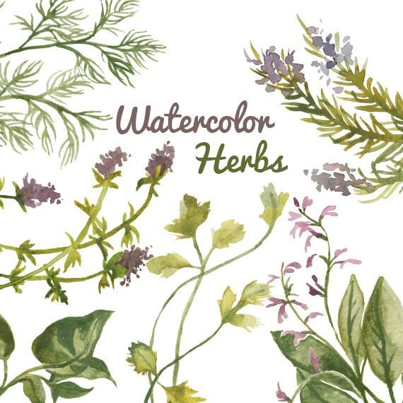Herbal clip art