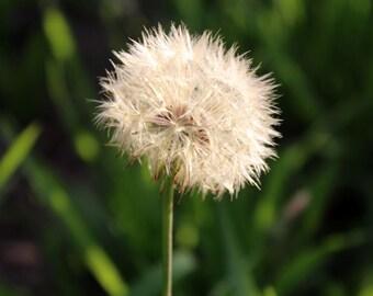 Digital photography download. Flower