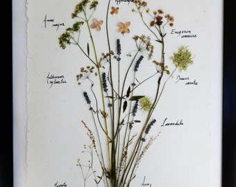 Herbarium of natural dried flowers