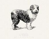 Sheepdog Vintage Line Art - PDF, PNG Digital Download ClipArt Transparent Background