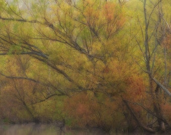 Autumn Trees along the River, Dreamy, Serene, Calm