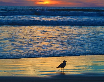A Lonely Bird, Sunset, Seagull, Portrait Photography, Oceanside, California