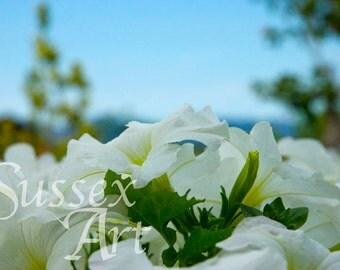 Mediterranean flowers wall art photograph Instant Download