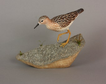 Buff Breasted Sandpiper - Lifesize - Wildfowl Wood Carving - Bird Art