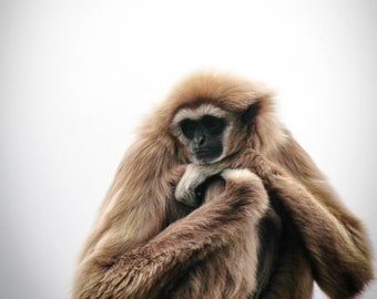 Gibbon on a post - Photo Print