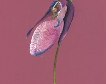 Print of an original pastel drawing of an orchid wildflower