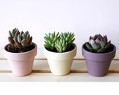 MINI Painted Clay Pot Succulents (PInk, White, Purple) - Perfect gift for everyone
