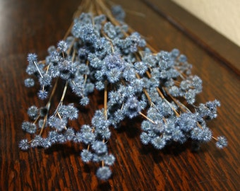 Gorgeous Blue Baby Reeds (Dried Flower)
