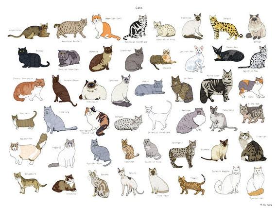 Cat Breeds Poster 18x24