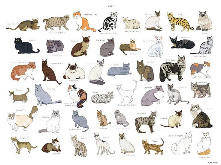 career cat arizona