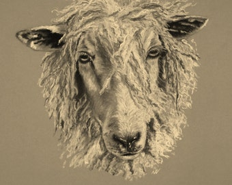 Limited Edition Glicee Print, mounted, Cotswold Sheep