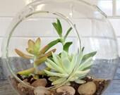 Hanging Globe Terrarium with Succulents