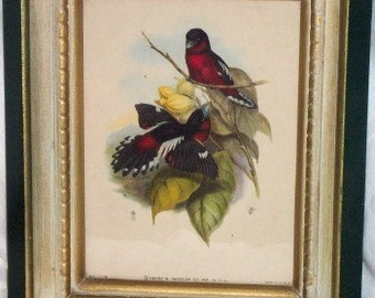 Henry Sandler Lithograph Print Framed Birds Bullfinch and Florals Print on Paper