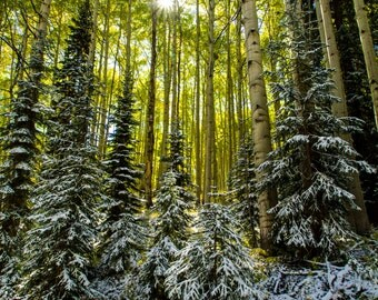 Photo Art - Mountain Photography - Fall Colors