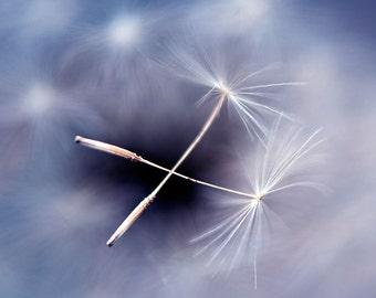 Dandelion Photography, Fine Art Print, Dandelion Seeds Close-up, Macro, Blue and Pink Pastel Colors, Floating