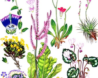 Middle Eastern Plants and Flowers - Botanical Print - Vintage Flower Print 1988 p49