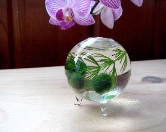 SALE! Zen Nano Orb Marimo Ball Ecosphere Terrarium