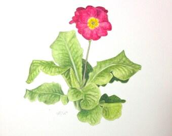 Primrose - Original Watercolor Botanical Painting by Paige Smith-Wyatt
