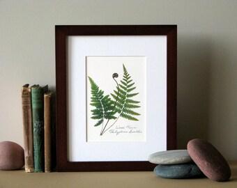 "Pressed fern print, 8"" x 10"" matted, Wood fern, green woodland ferns, botanical no. 021"