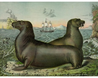 antique victorian illustration sea lions by the seashore illustration DIGITAL DOWNLOAD