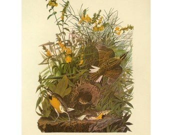 Meadowlark by Athos Menaboni Print Bird Book Plate SALE Buy 3, get 1 free or Buy 5, get 2 FREE