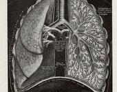 ANATOMY of LUNGS print, medical diagram of human anatomy, medical print