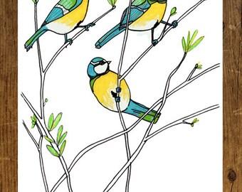 Blue Tit Art Print, A4 Bird illustration