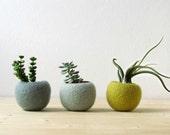 Free Shipping - Felt succulent planter / felted pod / Succulent terrarium / Green felt vases / felt bowl / home decor