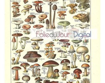 "Mushrooms Digital file French vintage dictionary plate - 8.5 x 11"" - Instant Download"