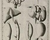 1714 Antique print of HUMAN ORGANS. Anatomy. Heart. Viscera. Eustachius Tabulae Anatomicae. First Edition. 302 years old anatomy engraving.