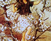 1930s BLACKTHORN FAIRY Cicely Mary Barker PRINT Ideal for Framing