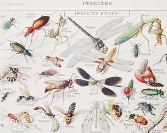 Antique French Dictionary Page - Insects, Butterflies, Bees - 1922 Original Engraved Lithograph Print - Vintage French Country Decor
