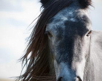 horse photo, equine art, dapple grey pony, grey, silver, equine wall decor,