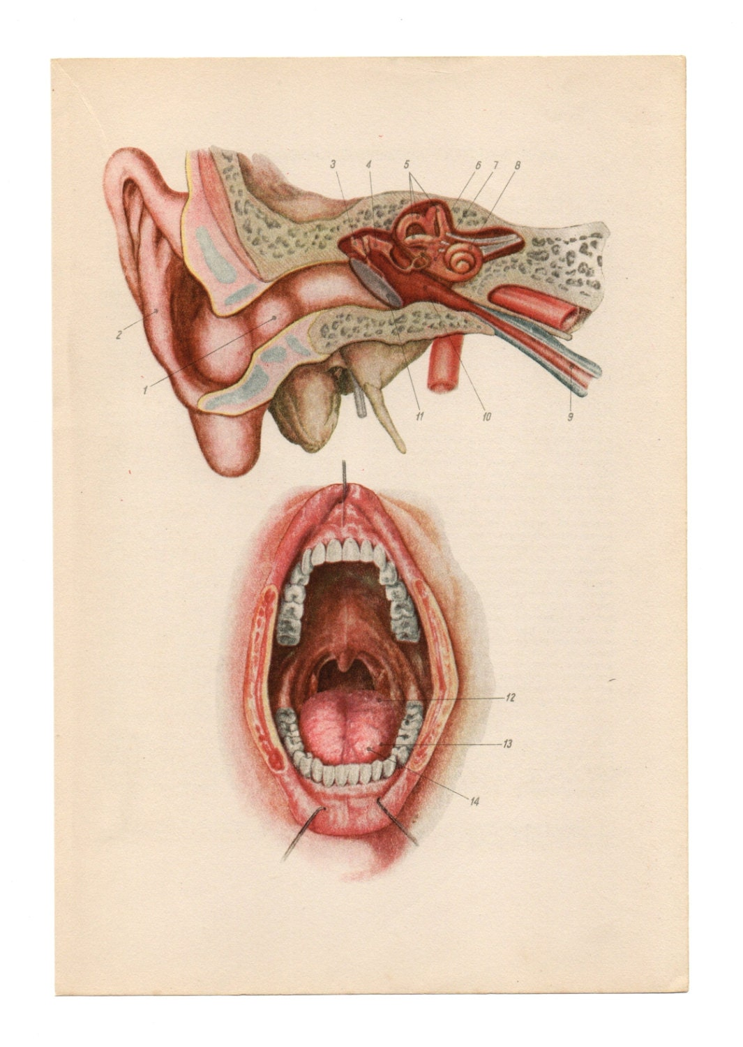 anatomical prints vintage medical diagrams by fromeuropewithlove🔎zoom