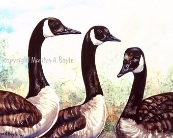 PRINT - CANADA GEESE; birds, three geese, wildlife, nature, wings, feathers,Canada, watercolor