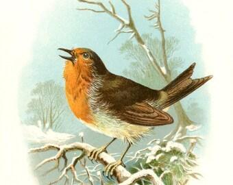 Vintage Winter ROBIN BIRD in the SNOW postcard- Digital Instant Download -  nature avian songbird ephemera print collage supply