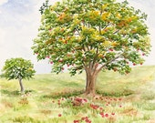 Apple Art Apple Painting Apple Print 11x14 From Original Watercolor. Red Apple Tree Art Apple Tree Painting Apple Orchard Art Fruit Art.