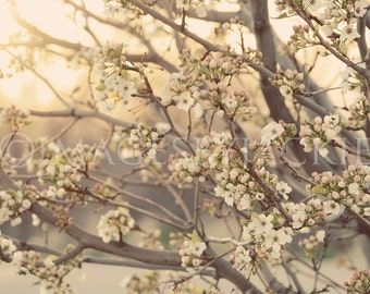 Blossom Tree Fine Art Photography Digital Download
