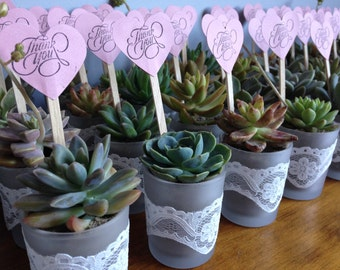 Planted Succulents Wedding Favour Bomboniere