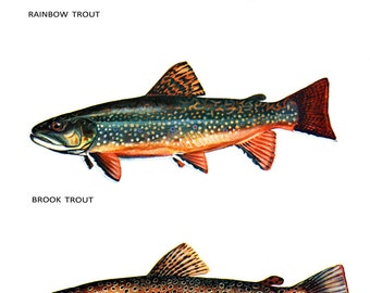 Trout Classification Poster, Brook Trout, Brown Trout, Rainbow Trout, Fish, Fishing