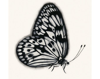 "Butterfly art print : Black and White Butterfly 4"" X 6""  print - 4 for 3 SALE"