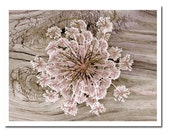 Rustic Flower Photography Pink Lace Wild Carrot Nature Baby Nursery Print Decor